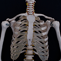 Orthopedic Massage Approaches to Upper Body Disorders