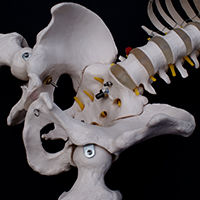Structural Issues in the Spine